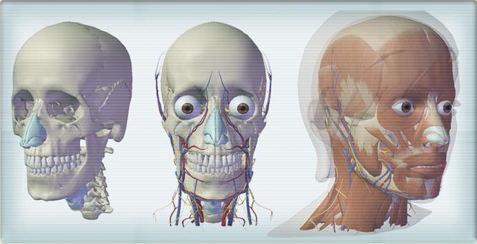 Vizualizace lidkého těla - kosti, tkáně, soustavy včetně jednotlivých orgánů.