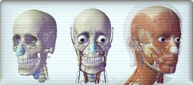 Visibile Body : Vizualizace lidského těla